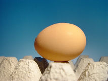 Egg. From the begining ;o Stock Images
