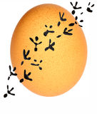Egg. And track's hen stock illustration