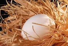 Egg. In nest Stock Photo