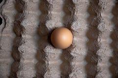 An Egg Alone in an Egg Carton. A single egg placed in the center of an empty cardboard egg carton Royalty Free Stock Photography