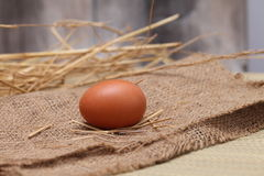 Egg, Animal Eggs. Stock Images