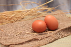 Egg, Animal Eggs. Stock Photo