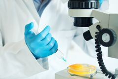 Egg and avian flu test control. Fresh egg sample quality control in laboratory microscope analysis Stock Images