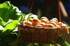 Egg basket Royalty Free Stock Photos