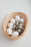 Egg basket Stock Images