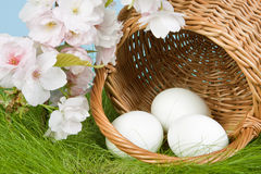 Egg basket and easter blossoms Royalty Free Stock Photos