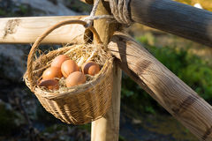 Egg basket in farm Royalty Free Stock Photo