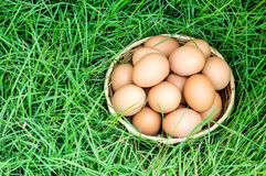 Egg in basket on fresh green grass Stock Photo