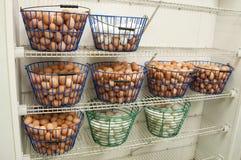 Egg Baskets Stock Images