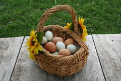 Egg baskets. Baskets full of wholesome nutritious free range organic green and brown eggs, right from the hen house farm fresh to you unedited image Royalty Free Stock Photography