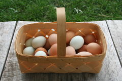 Egg baskets. Baskets full of wholesome nutritious free range organic green and brown eggs, right from the hen house farm fresh to you unedited image Stock Images