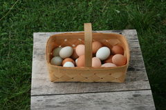 Egg baskets. Baskets full of wholesome nutritious free range organic green and brown eggs, right from the hen house farm fresh to you unedited image Stock Image