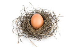 Egg in bird's nest Royalty Free Stock Photography