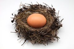 Egg bird's nest Stock Photo