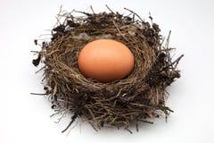 Egg bird's nest Stock Photo