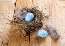 Egg in birds nest Royalty Free Stock Images
