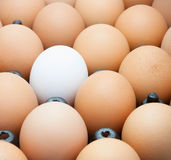 Egg in black package Stock Photography