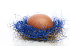Egg in a blue nest Stock Image