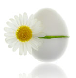 Egg bound Royalty Free Stock Image