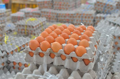 Egg in box. Many eggs in the box Royalty Free Stock Photos