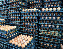 Egg in box for Sale Stock Photography