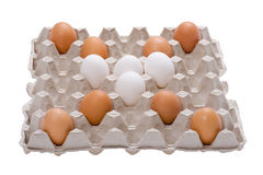 Egg on box on white background Stock Photography