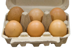Egg in the box Stock Image
