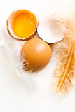 Egg and broken egg Stock Image