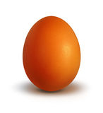 Egg brown. Clear brown egg on white background Stock Photos