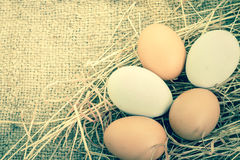 Egg on brown burlap Stock Images