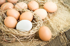 Egg on brown burlap Stock Photo