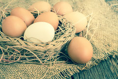 Egg on brown burlap Stock Photography