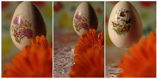 Egg with butterfly, flower - collage Royalty Free Stock Image
