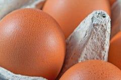 Egg a caixa com os ovos marrons frescos foto de stock