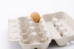 Egg in carton Stock Photography