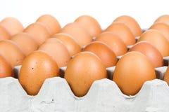 Egg in carton box Stock Photo
