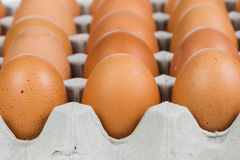 Egg in carton box Royalty Free Stock Images