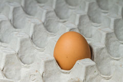 Egg in carton box Royalty Free Stock Photography