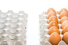 Egg in carton box Stock Image