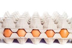 Egg in carton box Royalty Free Stock Photos