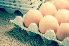 Egg in carton box Stock Photos
