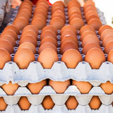 Egg in carton box package Stock Images