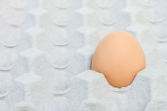 Egg in a carton package Stock Image