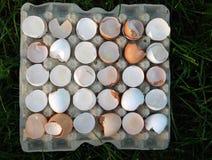 Egg carton  tray with shells Royalty Free Stock Image