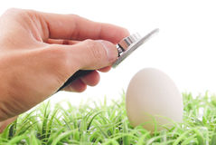 Egg Check Royalty Free Stock Image