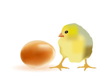 Egg and chicken Stock Photography
