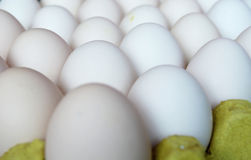 Egg, Chicken Egg Royalty Free Stock Photo