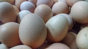 Egg chicken eggs stock photography