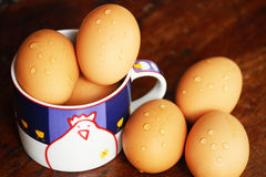 Egg from chicken Stock Image
