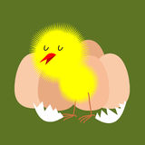 Egg and chicken. Furry chick hatched from an egg. Vector Stock Photo